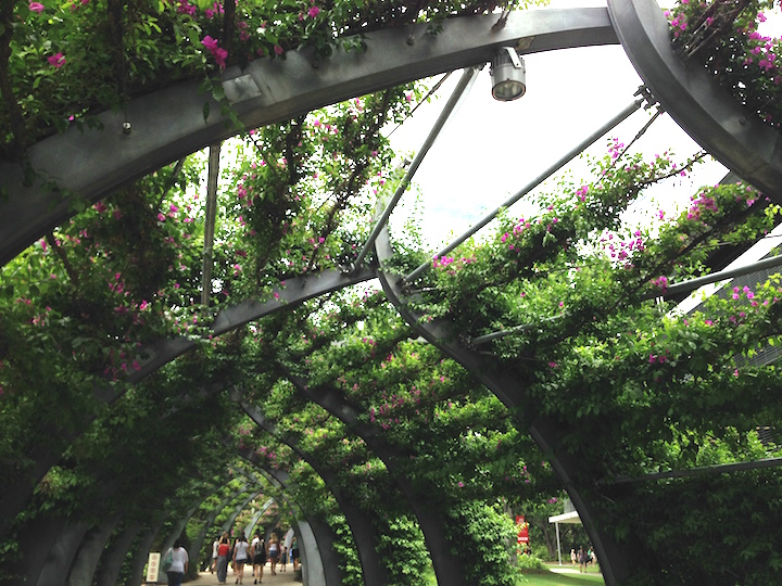 Arch of Flowers Brisbane