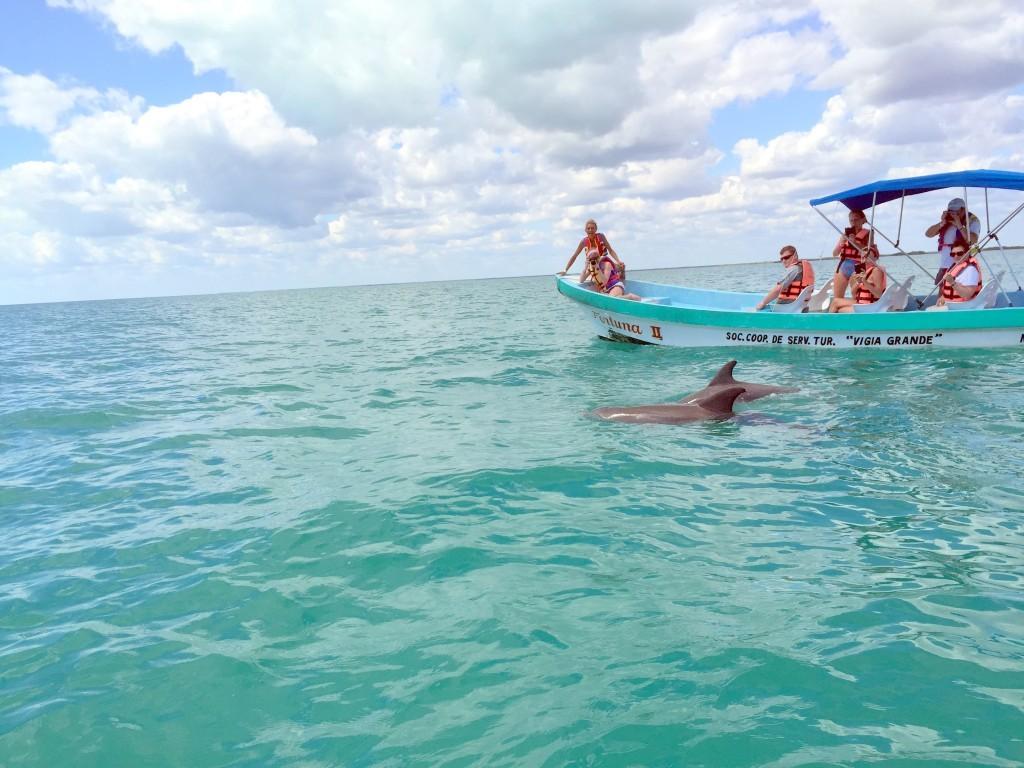wild dolphins Day tour to Punta Allen-Sian Kaan